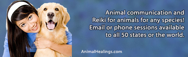 Animal Communication & Reiki for Animals