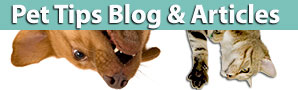 pet blog and articles for healhier pet family