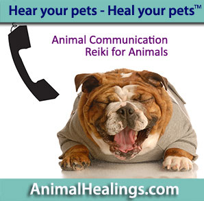 Kitten cell phone - Animal communication - anywhere in the USA or the world