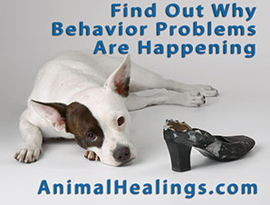 dog beahavior - animal communicator finds why its happening
