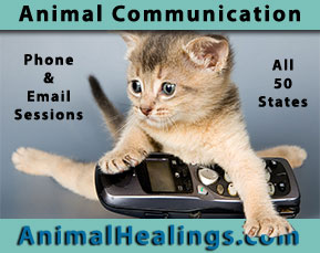 animal communicator - anywhere in the USA or the world