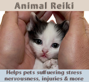 Reiki Kitten - for help with stressed pets