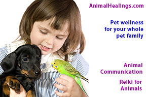 Pets love being heard through animal communication