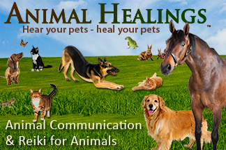 animal healings animal communication & reiki for animals