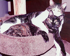 Monte & Molly helped by animal communication & Reiki
