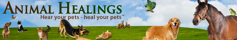 Animal Communicator and Reiki for pets healing