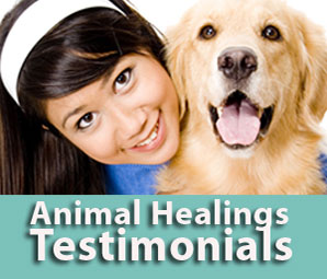 Animal communicator testimonials