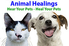 Animal communication helps during pet loss with support for the whole family including pets