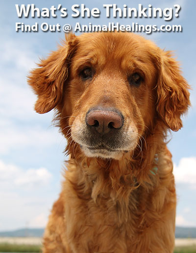 What's Your Pet Thinking - Use Animal Communication to Find Out