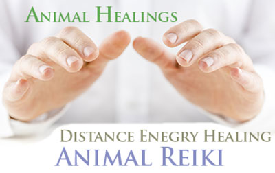 Animal Reiki Helps Pets of all Types
