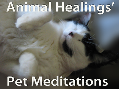 Guided meditations for your Pets