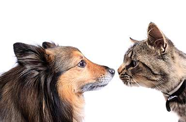 Photo of cat and dog, nose to nose