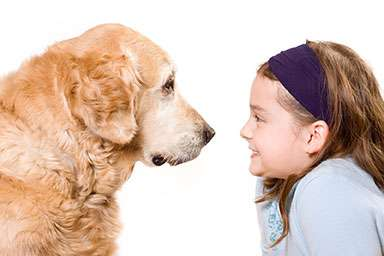 Pet wellness for your whole pet family using Animal Healings services