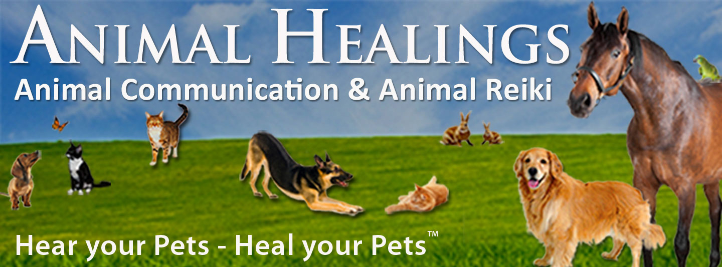 Every Missing Pet Poster Tells Story >> Animal Communicator Finds Lost Dog Cat Bird Pets Map Dowsing