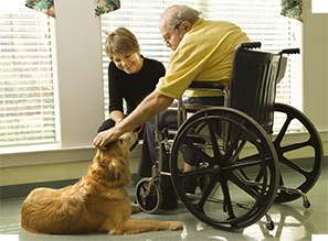 Animal communication can help Service Dogs on many issues