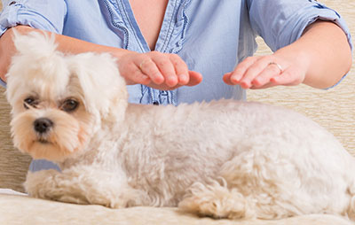 Animal Reiki Helps illness in pets