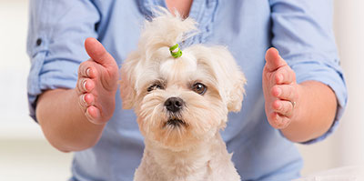 Animal Reiki helps reduce stressed pets