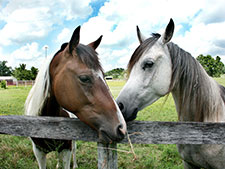 Horse behavior problems and issues so;lved by animal communication
