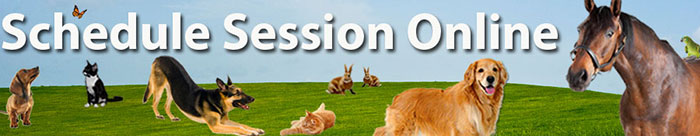 Schedule an animal communication or Reiki session