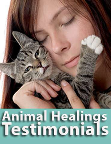 Animal Communication testiominals