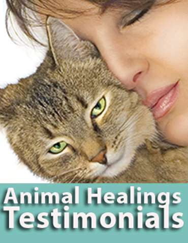 Animal Communication testiominials